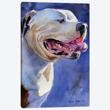 American Bulldog Portrait Canvas Print #RPK32} by Rachel Parker Canvas Art