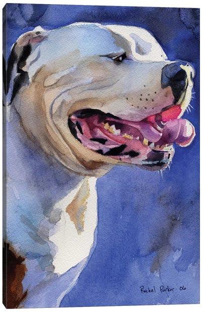 American Bulldog Portrait Canvas Art Print