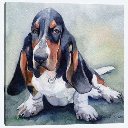 Basset Please Canvas Print #RPK33} by Rachel Parker Canvas Artwork