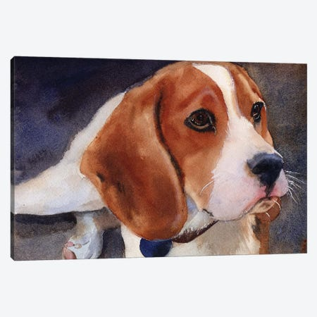 Beagle Portrait Canvas Print #RPK36} by Rachel Parker Canvas Print