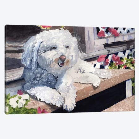 Bichon Frise Portrait Canvas Print #RPK37} by Rachel Parker Canvas Print