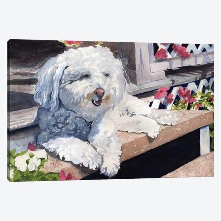 Bichon Frise Portrait Canvas Print #RPK37} by Rachel Parker Canvas Print