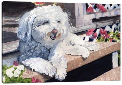 Bichon Frise Portrait Canvas Art Print