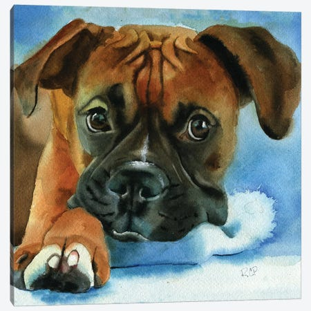 Boxer Baby Canvas Print #RPK38} by Rachel Parker Canvas Artwork