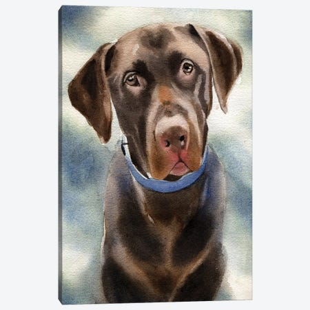 Chocolate Lab Portrait Canvas Print #RPK39} by Rachel Parker Canvas Artwork