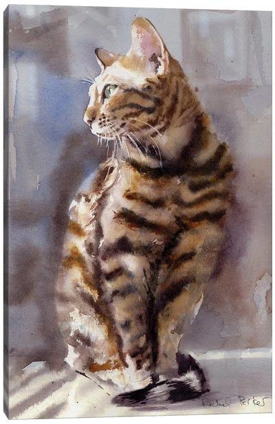 Bengal Light Canvas Art Print