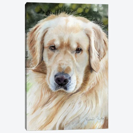 Golden Retriever Portrait 3-Piece Canvas #RPK42} by Rachel Parker Canvas Art Print