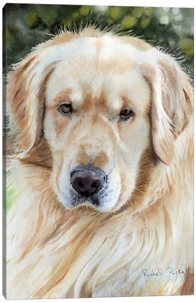 Golden Retriever Portrait Canvas Art Print