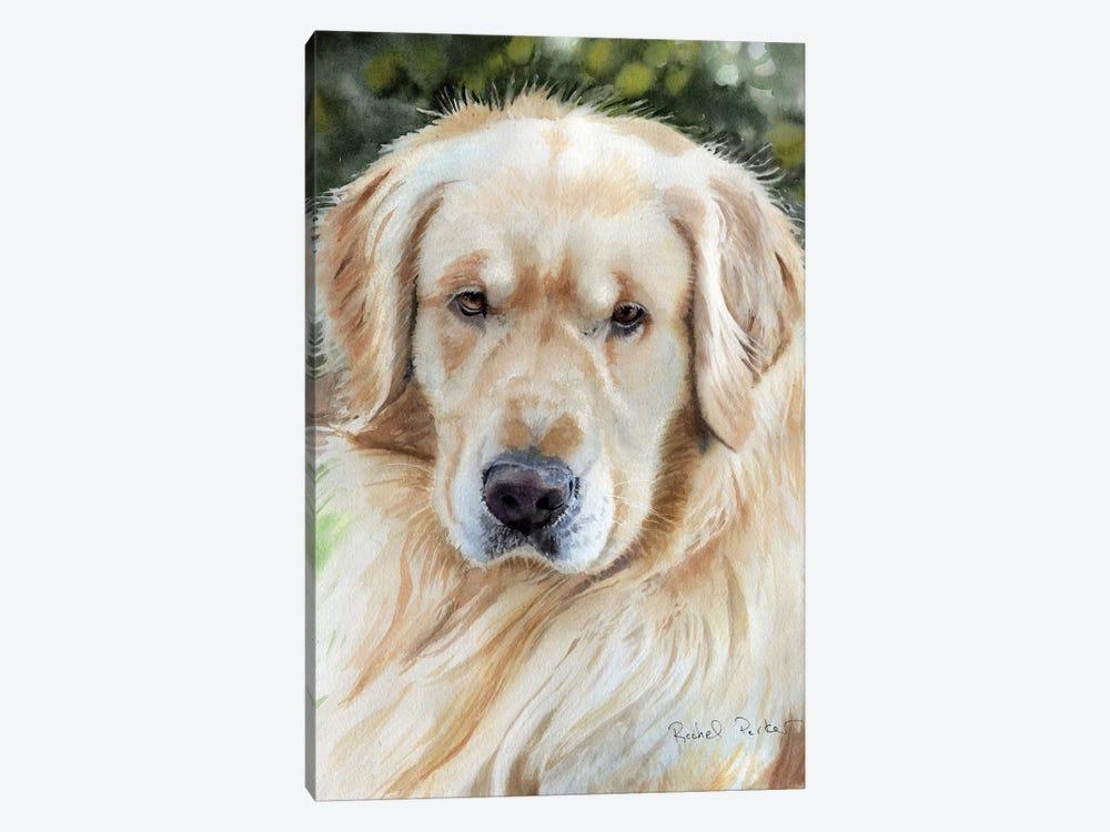 Golden Retriever Portrait by Rachel Parker 1-piece Canvas Art