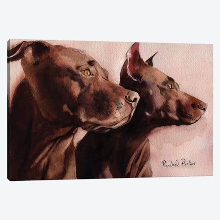 Good Morning Pit Bulls Canvas Print #RPK43} by Rachel Parker Art Print
