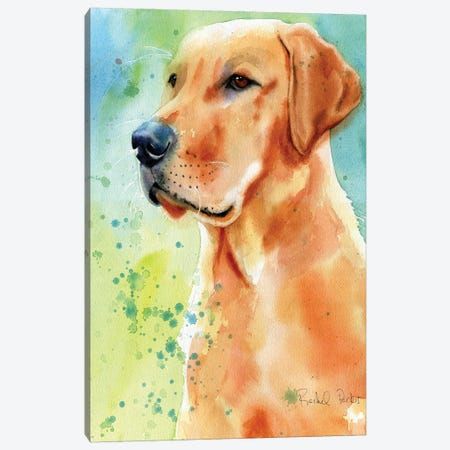 Labrador Splash Canvas Print #RPK45} by Rachel Parker Canvas Wall Art