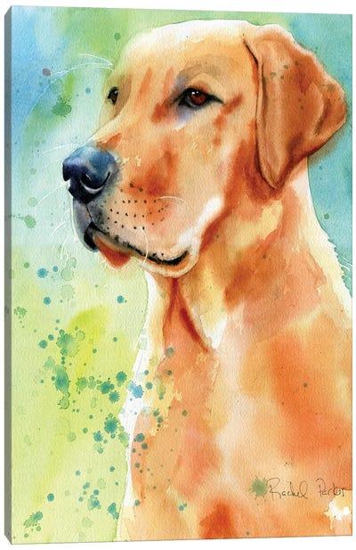 Labrador Splash Canvas Art Print