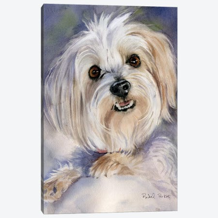 Maltese Portrait Rachel Varner Canvas Print #RPK46} by Rachel Parker Canvas Artwork