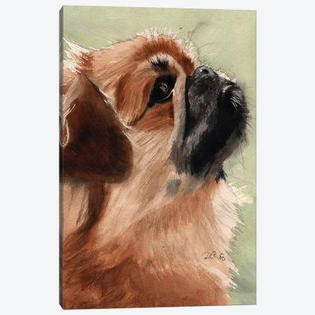 Pekingese Portrait Canvas Print #RPK47} by Rachel Parker Canvas Art