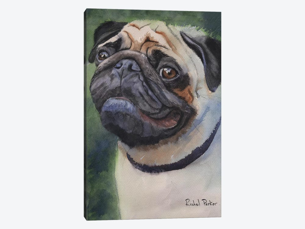 Pug Portrait by Rachel Parker 1-piece Canvas Print