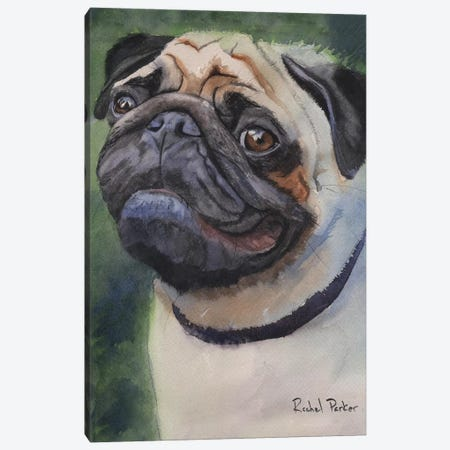 Pug Portrait Canvas Print #RPK49} by Rachel Parker Canvas Print
