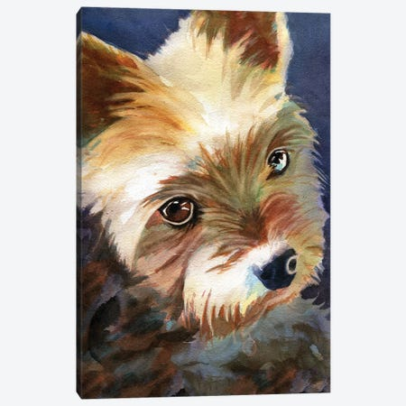 Yorky Canvas Print #RPK52} by Rachel Parker Canvas Artwork