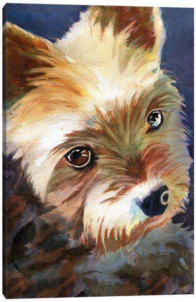 Yorky Canvas Art Print