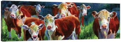 Curious Cows Canvas Art Print