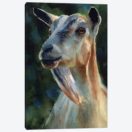 Goat Thoughts Canvas Print #RPK54} by Rachel Parker Art Print
