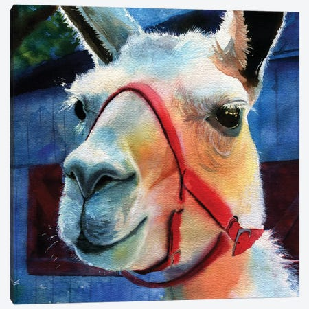 Llama Love Canvas Print #RPK55} by Rachel Parker Canvas Art Print