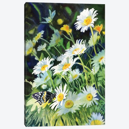 Daisy And Butterfly Canvas Print #RPK60} by Rachel Parker Art Print