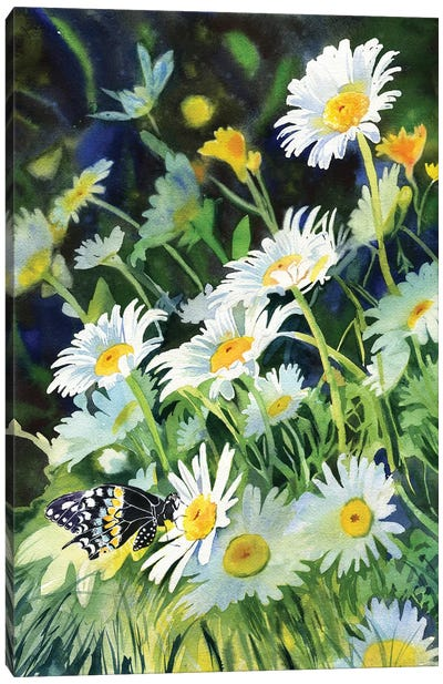 Daisy And Butterfly Canvas Art Print