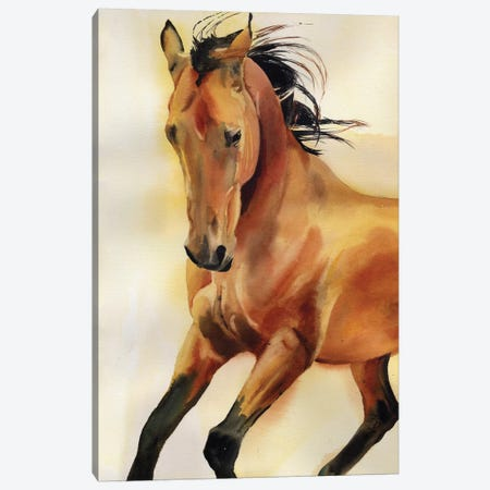 Akhal-Teke Canvas Print #RPK66} by Rachel Parker Canvas Art