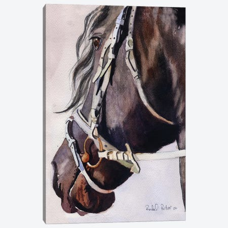 Friesian Bridles Canvas Print #RPK68} by Rachel Parker Art Print