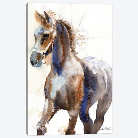 Friesian Yearling Canvas Print #RPK72} by Rachel Parker Canvas Art