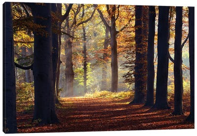 Fairytale Forest Canvas Art Print