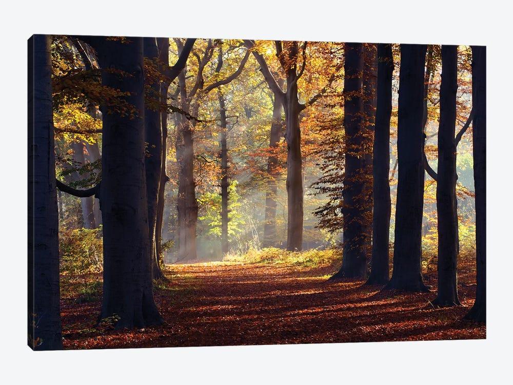 Fairytale Forest by Roeselien Raimond 1-piece Canvas Print