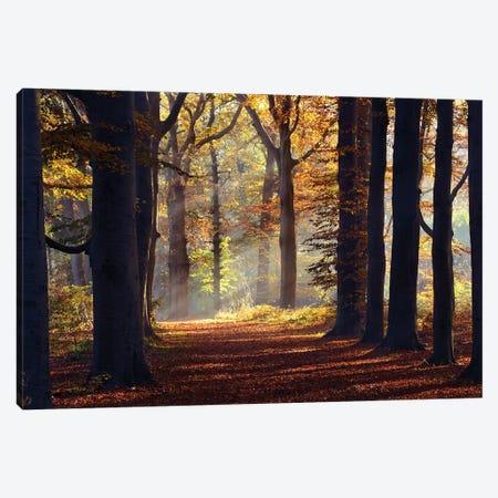 Fairytale Forest Canvas Print #RRA12} by Roeselien Raimond Canvas Print