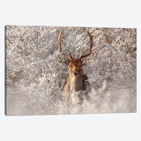 Fallow Deer & Frost Canvas Print #RRA13} by Roeselien Raimond Canvas Art Print