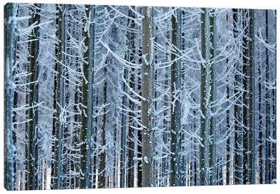 Frozen Lines Canvas Art Print