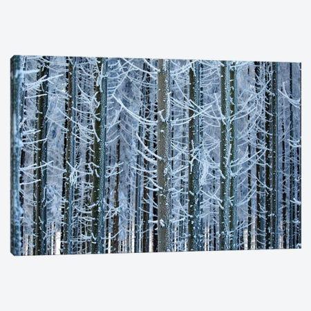 Frozen Lines Canvas Print #RRA14} by Roeselien Raimond Canvas Artwork