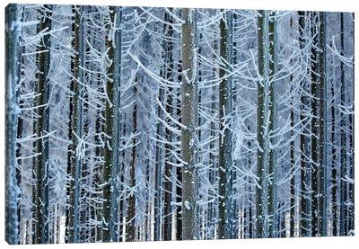 Frozen Lines Canvas Art Print