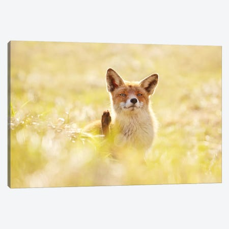 Funny Fox Canvas Print #RRA15} by Roeselien Raimond Canvas Wall Art