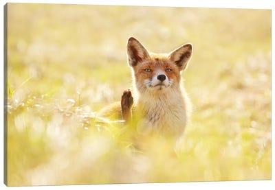 Funny Fox Canvas Art Print