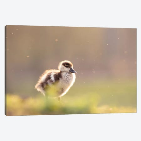 Furry Creature Canvas Print #RRA16} by Roeselien Raimond Canvas Art