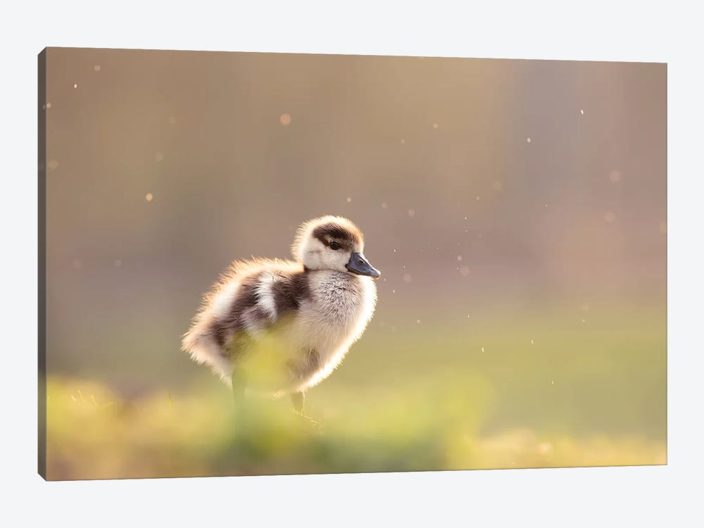 Furry Creature by Roeselien Raimond 1-piece Art Print