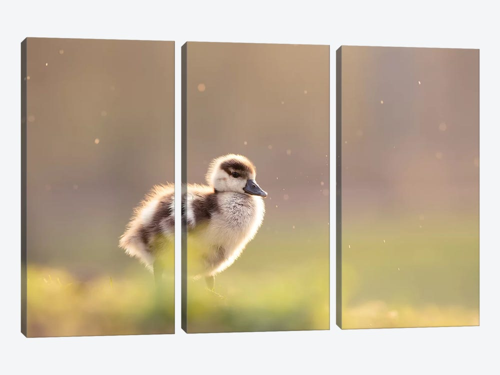 Furry Creature by Roeselien Raimond 3-piece Canvas Print