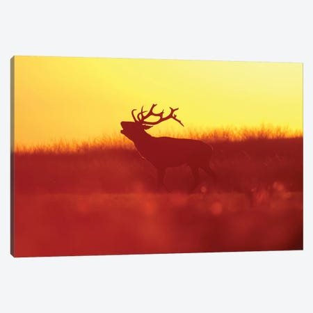 Golden Mood Canvas Print #RRA17} by Roeselien Raimond Canvas Artwork