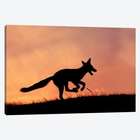 Happy Fox Is Happy II Canvas Print #RRA19} by Roeselien Raimond Art Print