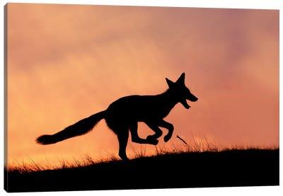 Happy Fox Is Happy II Canvas Art Print