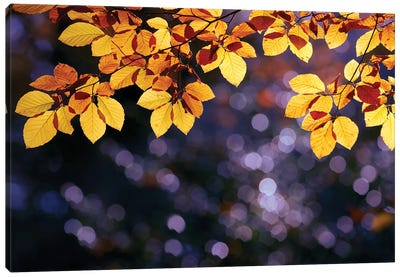 Autumn Party Canvas Art Print