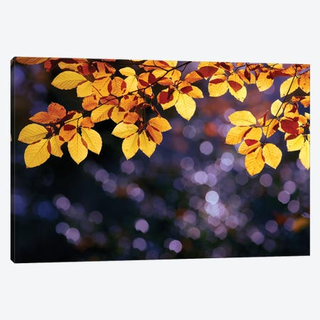 Autumn Party Canvas Print #RRA1} by Roeselien Raimond Canvas Artwork