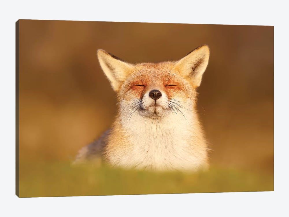 Happy Fox Is Happy III by Roeselien Raimond 1-piece Canvas Wall Art