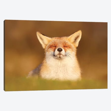 Happy Fox Is Happy III Canvas Print #RRA20} by Roeselien Raimond Canvas Wall Art