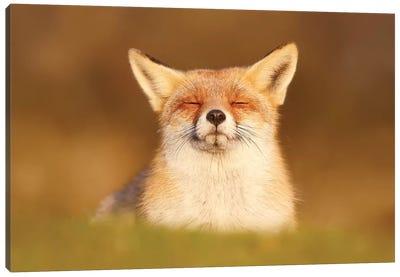 Happy Fox Is Happy III Canvas Art Print